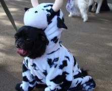Doggie Costumes