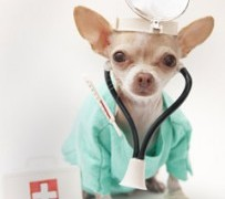 Overpaying For Pet Healthcare
